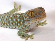 Продажа Рептилий и других экзотических животных.