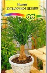 Насіння ноліни «Бутилочне дерево»