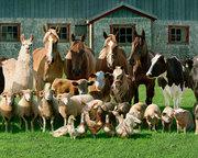 Требуются помощники для заготовки кормов на ферме